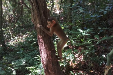 Vườn quốc gia Phong Nha – Kẻ Bàng: Thả động vật hoang dã về với môi trường tự nhiên